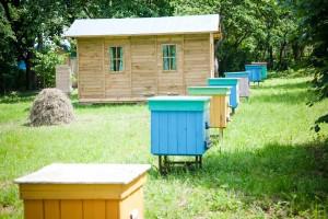 Пчелиный санаторий